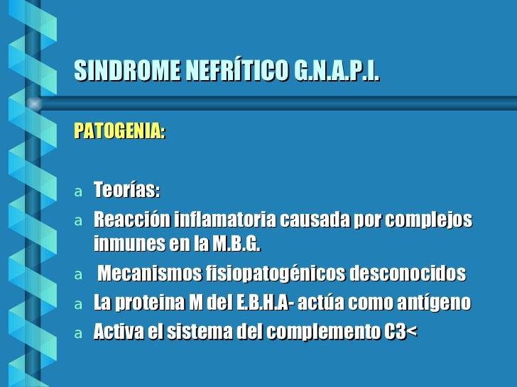 SINDROME NEFRÍTICO G.N.A.P.I. <ul><li>PATOGENIA: </li></ul><ul><li>Teorías:  </li></ul><ul><li>Reacción inflamatoria causa...
