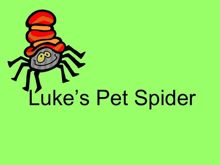 Luke's Pet Spider