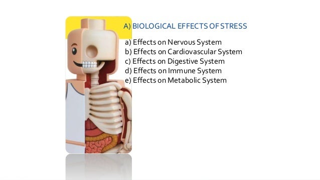a look at the harmful effects of stress The physical effects of stress are directly correlated  let's look at how the body reacts to stress  now the physical effects of stress can be harmful to.