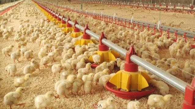 Costa Rica: Acceso a mercados DR-CAFTA Productos avícolas (2003-2014) Alberto Barquero Martínez— Rebeca Durán Guevara— K...