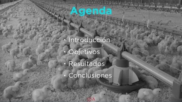 Negociacion DR-CAFTA [Avicola] Slide 3