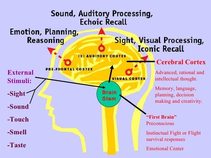 """ First Brain""  Preconscious Instinctual Fight or Flight survival responses Emotional Center   Cerebral Cortex Advanced, r..."