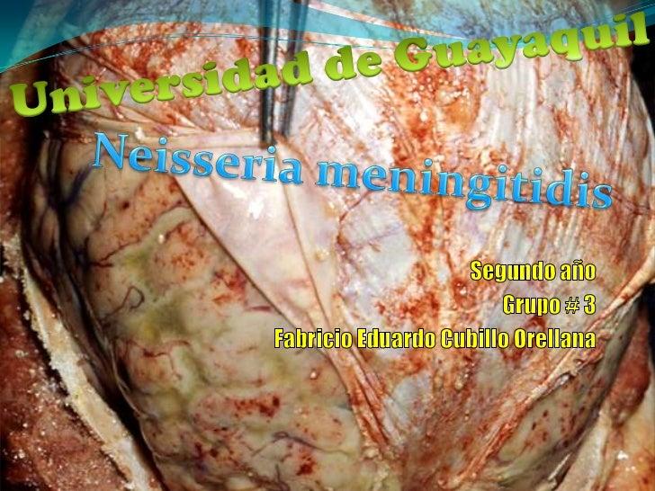 Neisseria meningitidis Morfología Patología   Meningitis   Meningococemia Diagnostico Tratamiento Prevención Video        ...