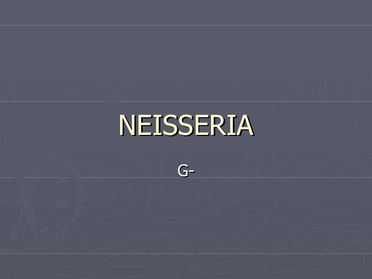 NEISSERIA G-