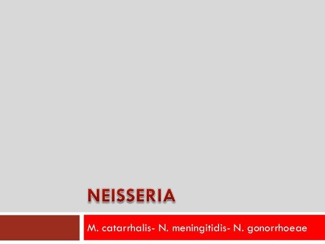 M. catarrhalis- N. meningitidis- N. gonorrhoeae
