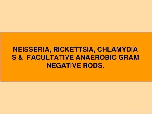 NEISSERIA, RICKETTSIA, CHLAMYDIA S & FACULTATIVE ANAEROBIC GRAM NEGATIVE RODS.  1