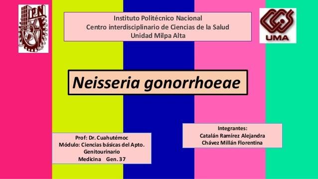 Instituto Politécnico Nacional  Centro interdisciplinario de Ciencias de la Salud  Unidad Milpa Alta  Neisseria gonorrhoea...