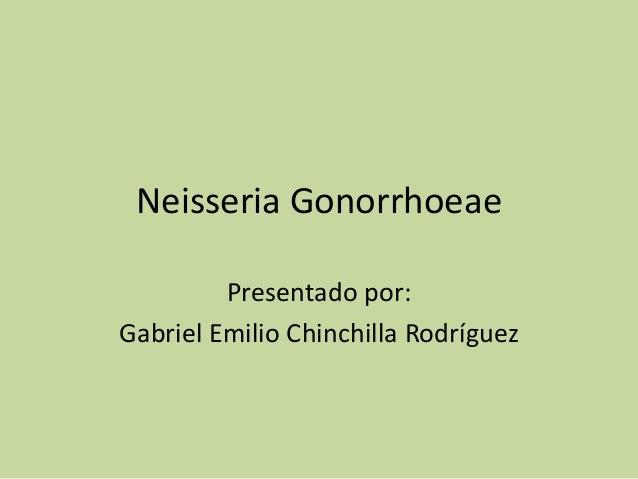 Neisseria Gonorrhoeae         Presentado por:Gabriel Emilio Chinchilla Rodríguez