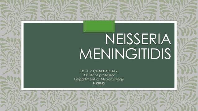 NEISSERIA MENINGITIDIS Dr. K V CHAKRADHAR Assistant professor Department of Microbiology NRIIMS