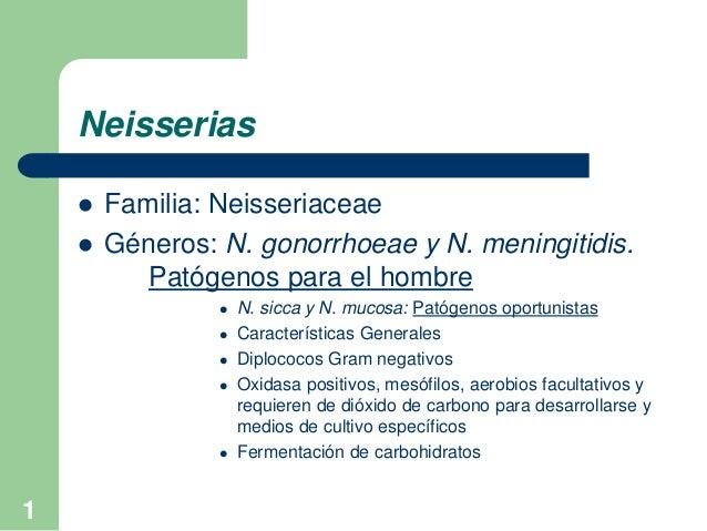 1 Neisserias  Familia: Neisseriaceae  Géneros: N. gonorrhoeae y N. meningitidis. Patógenos para el hombre  N. sicca y N...