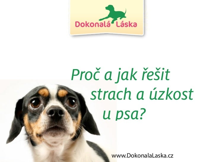 Proč a jak řešit   strach a úzkost     u psa?     www.DokonalaLaska.cz
