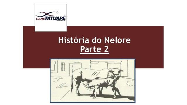 História do Nelore  Parte 2  Insira uma imagem relacionada com seu tema