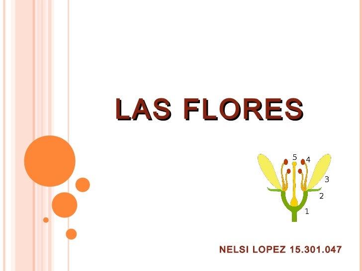 LAS FLORES     NELSI LOPEZ 15.301.047