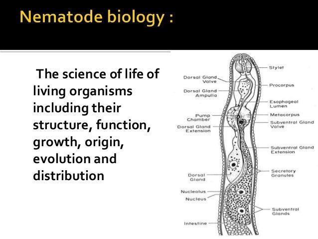 nematology-nematode biology,ecology Slide 2