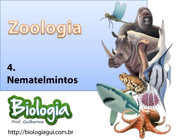 NematelmintosO Filo Nemathelmintes apresneta comoapomorfismo uma mesoderme formadorade um pseudoceloma, cavidade incomplet...