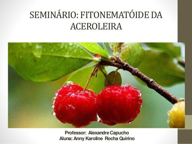 SEMINÁRIO: FITONEMATÓIDE DA  ACEROLEIRA  Professor: Alexandre Capucho  Aluna: Anny Karoline Rocha Quirino