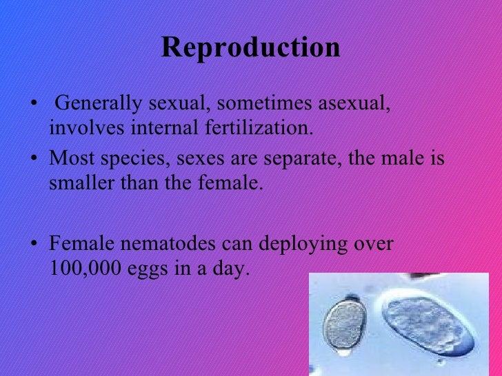 Nematoda reproduction asexual reproduction
