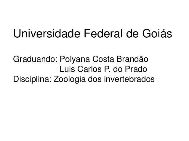 Universidade Federal de Goiás  Graduando: Polyana Costa Brandão  Luis Carlos P. do Prado  Disciplina: Zoologia dos inverte...