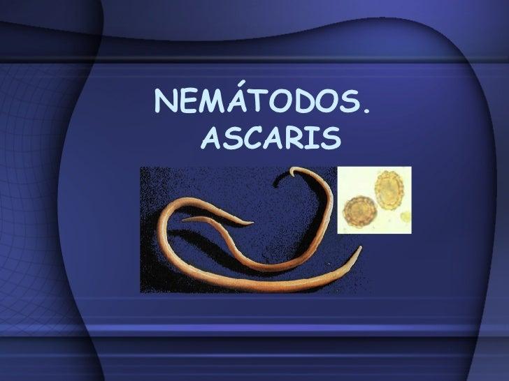 NEMÁTODOS.  ASCARIS