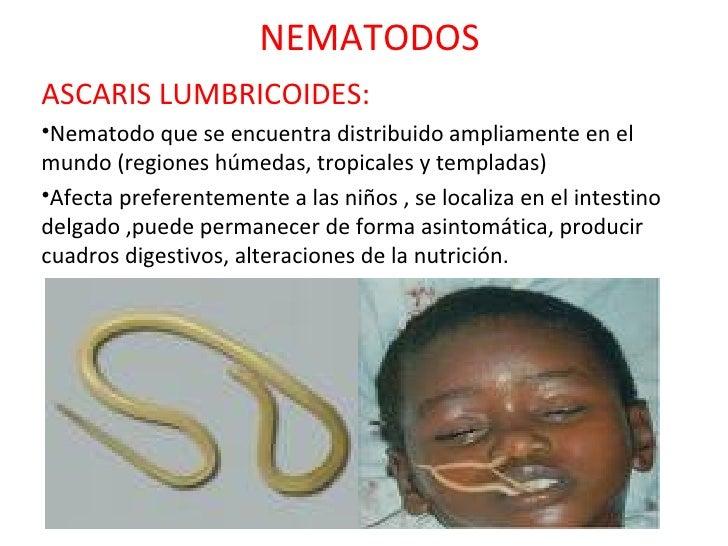 NEMATODOS <ul><li>ASCARIS LUMBRICOIDES: </li></ul><ul><li>Nematodo que se encuentra distribuido ampliamente en el mundo (r...