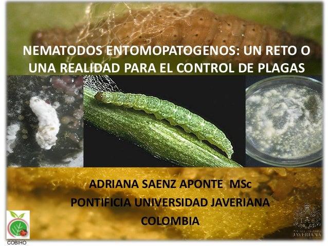 NEMATODOS ENTOMOPATOGENOS: UN RETO O UNA REALIDAD PARA EL CONTROL DE PLAGAS ADRIANA SAENZ APONTE MSc PONTIFICIA UNIVERSIDA...