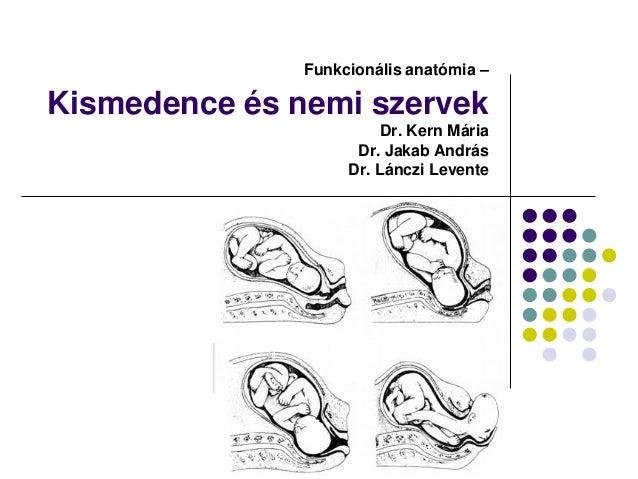 Funkcionális anatómia –Kismedence és nemi szervek                         Dr. Kern Mária                     Dr. Jakab And...