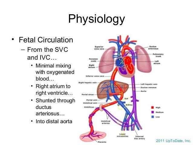 Neonatal Resuscitation, Dr. Wylie 7/17/14