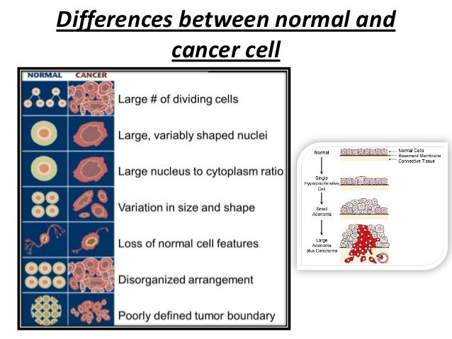 whats difference between cancer cell and normal cell