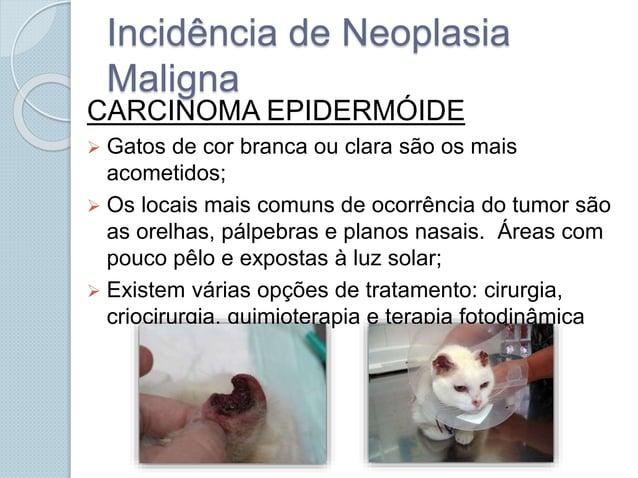 Incidência de Neoplasia Maligna CARCINOMA EPIDERMÓIDE  Gatos de cor branca ou clara são os mais acometidos;  Os locais m...