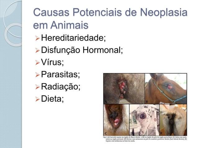 Causas Potenciais de Neoplasia em Animais Hereditariedade; Disfunção Hormonal; Vírus; Parasitas; Radiação; Dieta;