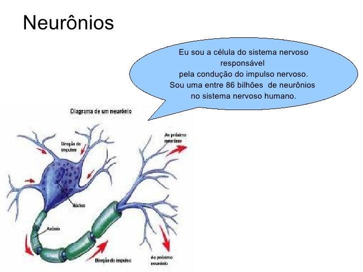 Neurônios Eu sou a célula do sistema nervoso responsável  pela condução do impulso nervoso. Sou uma entre 86 bilhões  de n...