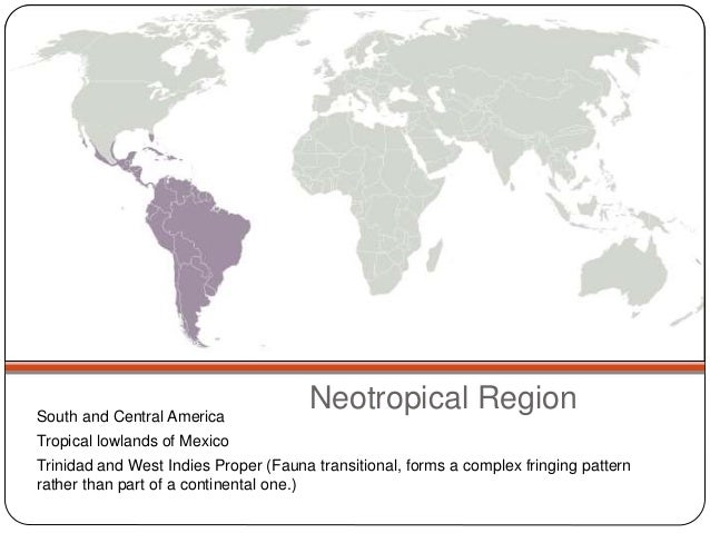 Neotropical Region  South and Central America  Tropical lowlands of Mexico  Trinidad and West Indies Proper (Fauna transit...