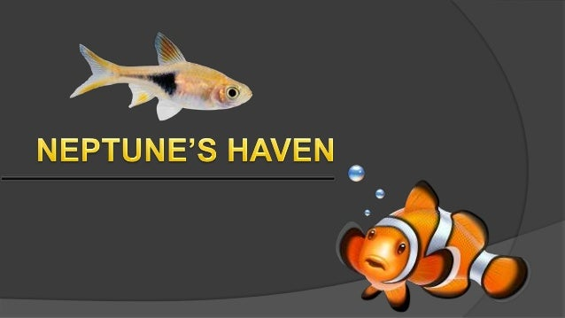 If you're unaccustomed keeping fish you will be unsure that is the best aquarium to shop for. What size is the best? What ...