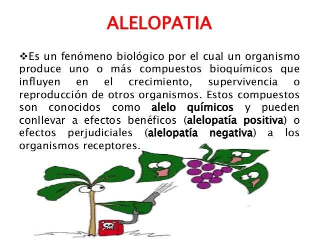 Taller organoponico 039 for Alelopatia en hortalizas