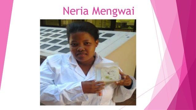 Neria Mengwai