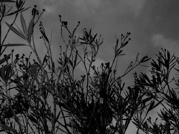 Nerium oleander L.                                                  monografia     UTAD | Lic. Arquitectura Paisagista | P...