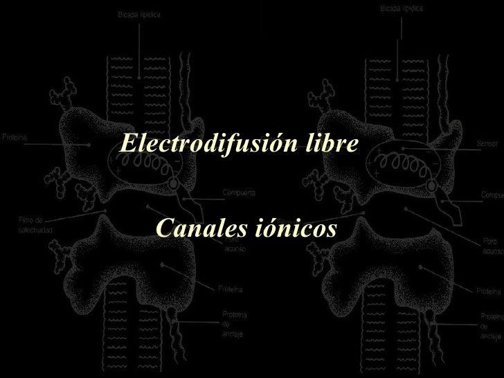 Electrodifusión libre  Canales iónicos
