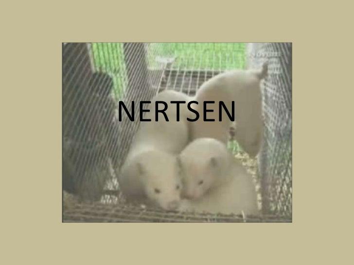 NERTSEN<br />