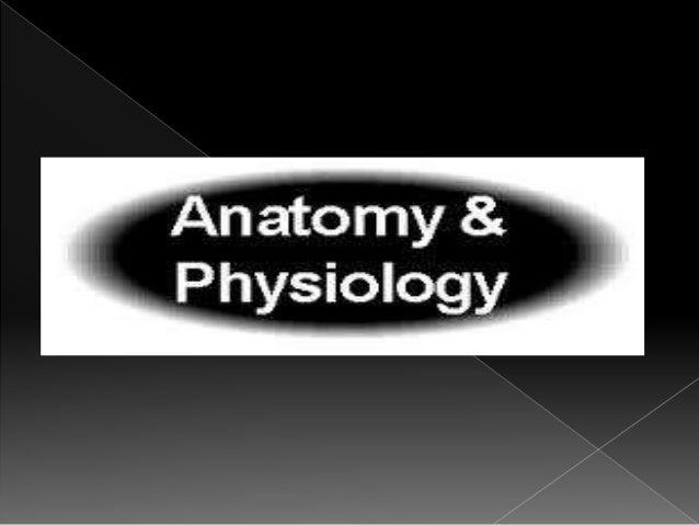 Nerve injury and repair Slide 3