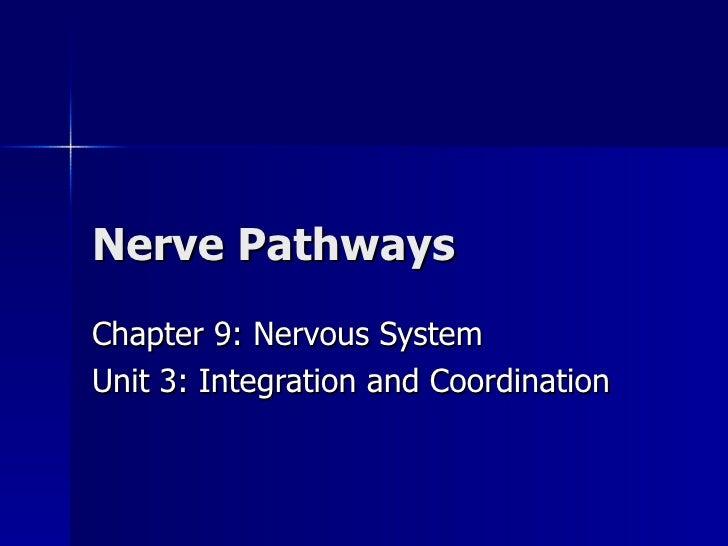 Nerve Pathways Chapter 9: Nervous System Unit 3: Integration and Coordination
