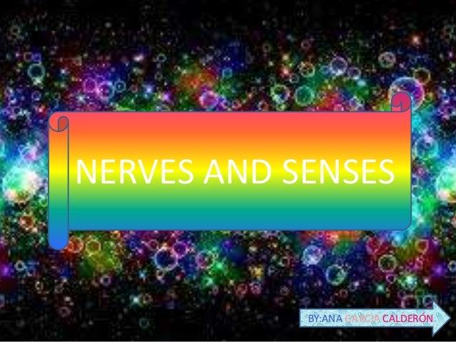 NERVES AND SENSES  BY:ANA GARCIA CALDERÓN