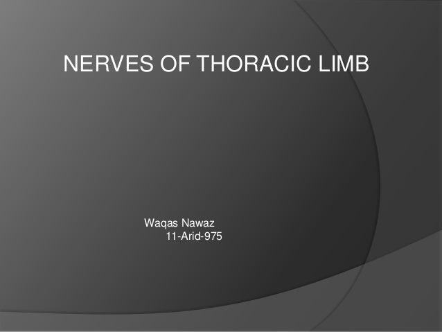 NERVES OF THORACIC LIMB      Waqas Nawaz         11-Arid-975