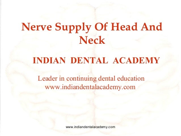 Nerve Supply Of Head And Neck INDIAN DENTAL ACADEMY Leader in continuing dental education www.indiandentalacademy.com  www...