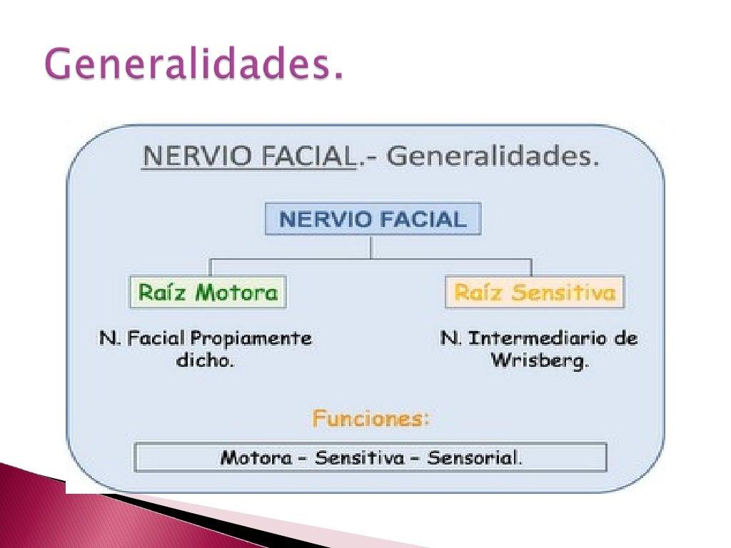 Nervio facial