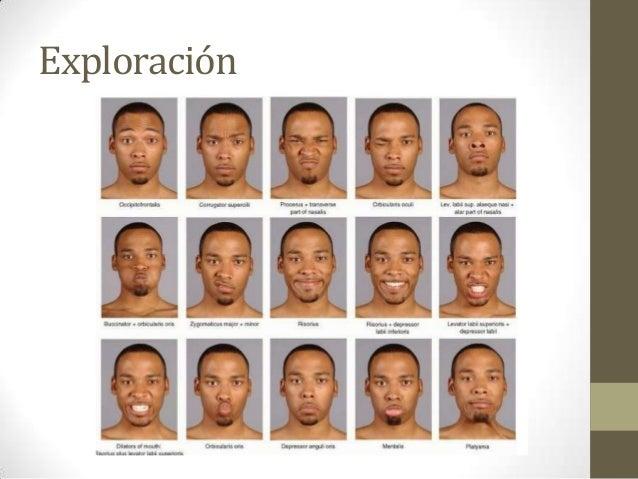Nervio facial for Cuarto par craneal
