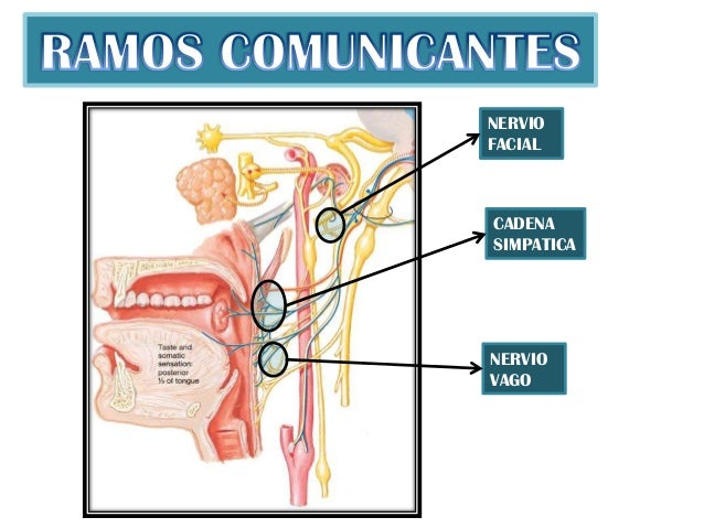 Nervio glosofaringeo