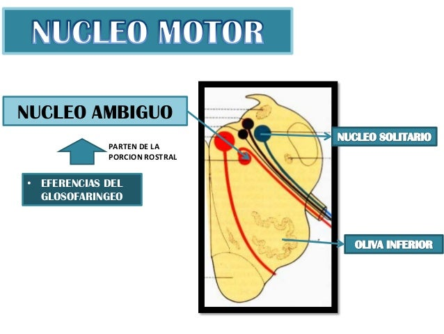 NUCLEO AMBIGUO EPUB DOWNLOAD