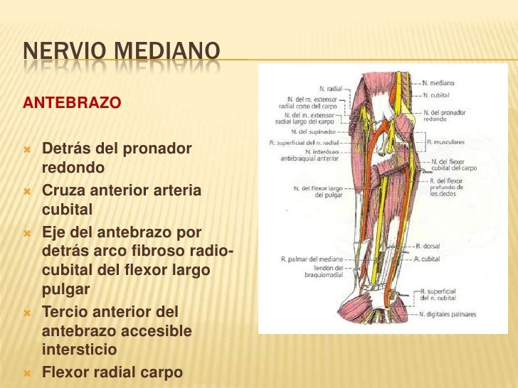 Nervio mediano