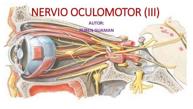Nervio oculomotor for 12 paredes craneales