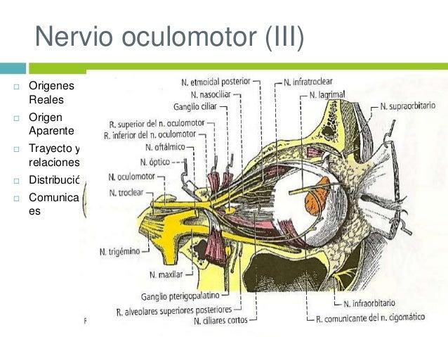 Nervios ojo